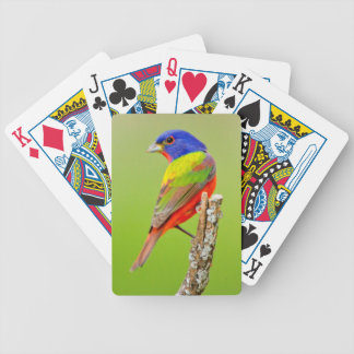 Painted Bunting (Passerina ciris) Male Perched Bicycle Playing Cards