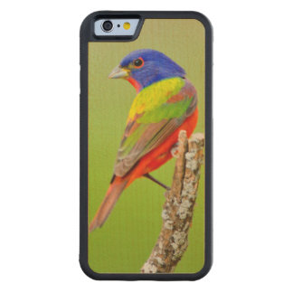 Painted Bunting (Passerina ciris) Male Perched Carved® Maple iPhone 6 Bumper Case