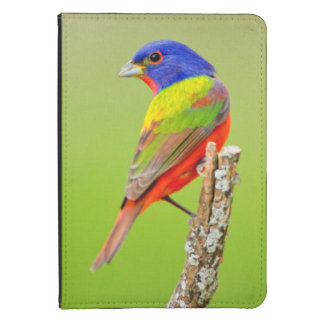 Painted Bunting (Passerina ciris) Male Perched Kindle Case