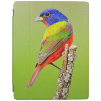 Painted Bunting (Passerina ciris) Male Perched iPad Cover