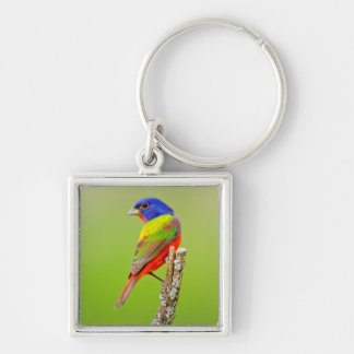 Painted Bunting (Passerina ciris) Male Perched Key Chain