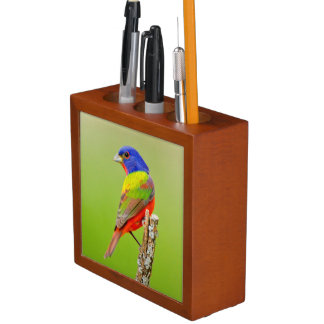 Painted Bunting (Passerina ciris) Male Perched Pencil Holder