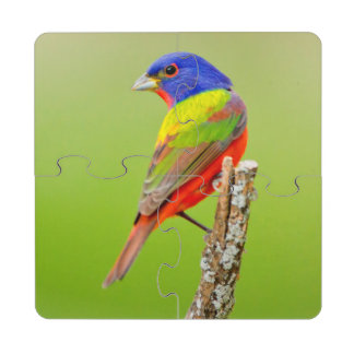Painted Bunting (Passerina ciris) Male Perched Puzzle Coaster