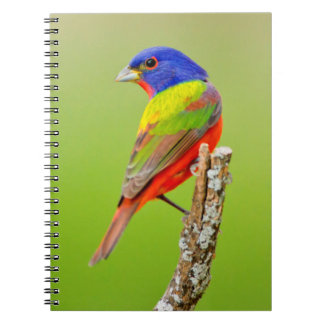 Painted Bunting (Passerina ciris) Male Perched Spiral Notebook