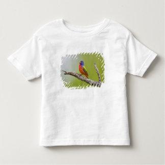 Painted Bunting Passerina ciris) male singing T-shirt