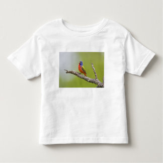 Painted Bunting Passerina ciris) male singing Toddler T-shirt