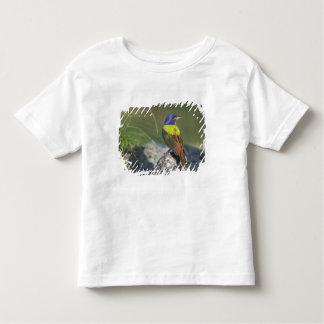 Painted Bunting, Passerina ciris, male , T-shirt