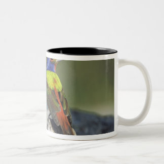 Painted Bunting, Passerina ciris, male , Two-Tone Coffee Mug