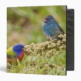 Painted Bunting Passerina citria) adult male 2 3 Ring Binder