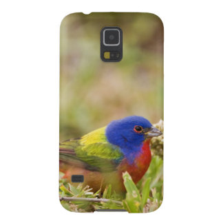 Painted Bunting Passerina citria) adult male 2 Galaxy S5 Cover