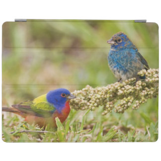 Painted Bunting Passerina citria) adult male 2 iPad Cover