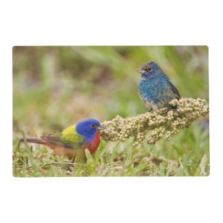 Painted Bunting Passerina citria) adult male 2 Placemat