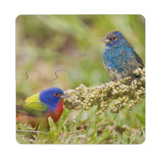 Painted Bunting Passerina citria) adult male 2 Puzzle Coaster