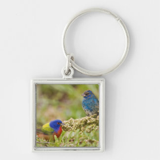 Painted Bunting Passerina citria) adult male 2 Silver-Colored Square Keychain