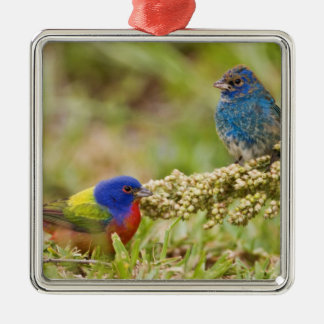 Painted Bunting Passerina citria) adult male 2 Square Metal Christmas Ornament