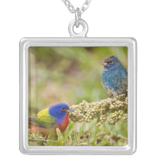 Painted Bunting Passerina citria) adult male 2 Square Pendant Necklace
