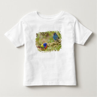 Painted Bunting Passerina citria) adult male 2 Tee Shirt