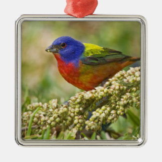 Painted Bunting Passerina citria) adult male Metal Ornament