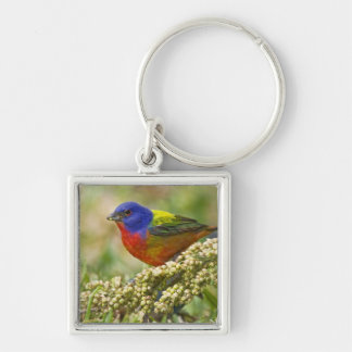 Painted Bunting Passerina citria) adult male Silver-Colored Square Keychain