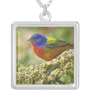 Painted Bunting Passerina citria) adult male Square Pendant Necklace
