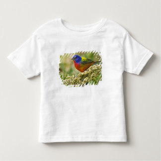 Painted Bunting Passerina citria) adult male T Shirt