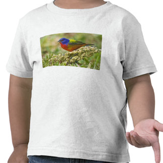Painted Bunting Passerina citria) adult male T Shirts