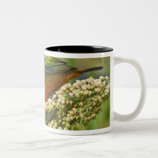 Painted Bunting Passerina citria) adult male Two-Tone Coffee Mug