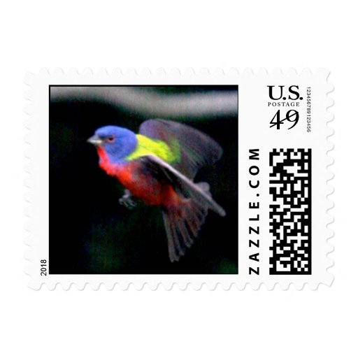 Painted Bunting Postage Stamp