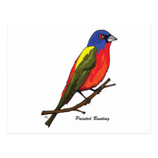 PAINTED BUNTING POSTCARD