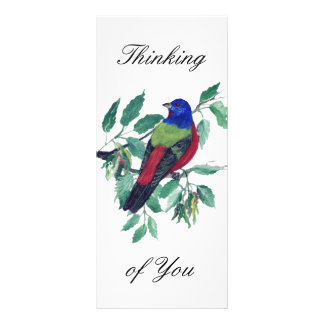 Painted Bunting Thinking of You Rack Card Design