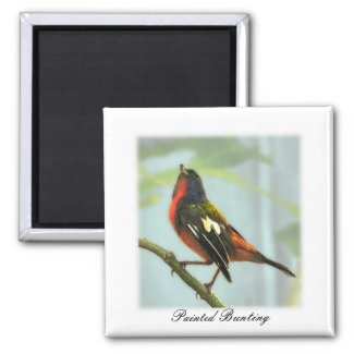 Painted Bunting Watercolor Magnet