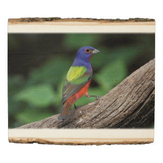 Painted Bunting Wood Panel