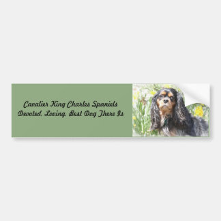 Painted Cavalier King Charles Spaniel Bumper Sticker