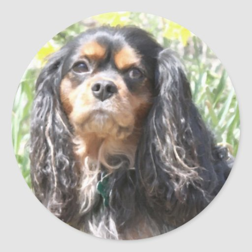 Painted Cavalier King Charles Spaniel Stickers