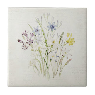 Painted Conanthera Flower Bouquet Vintage Script Ceramic Tile
