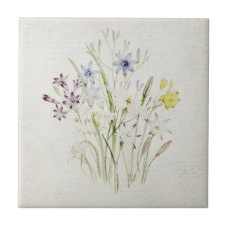 Painted Conanthera Flower Bouquet Vintage Script Small Square Tile
