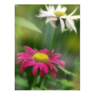 Painted Daisies In Dappled Sunlight Postcard