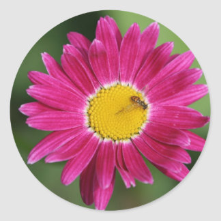 Painted Daisy Cards and more Classic Round Sticker