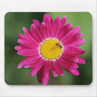 Painted Daisy Cards and more Mouse Pad