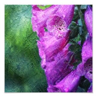 Painted Foxglove Photo Art