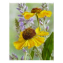 Painted Helenium Flowers print