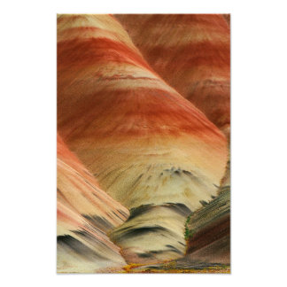 Painted Hills and Wildflowers Photo Print