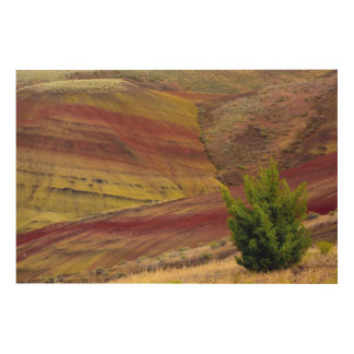 Painted Hills, Mitchell, Oregon, USA Wood Wall Art