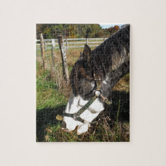 Painted Horse Eating Queen Ann Lace flower Jigsaw Puzzles