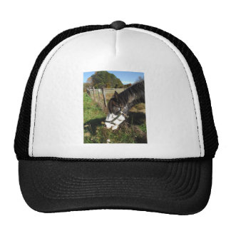 Painted Horse, Eating Queen Ann Lace flower Trucker Hat