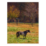 Painted Horse in the Distance Postcards
