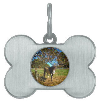 Painted Horse, Pet ID Tag