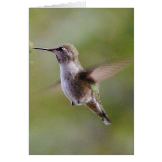 Painted Hummingbird Bird Card