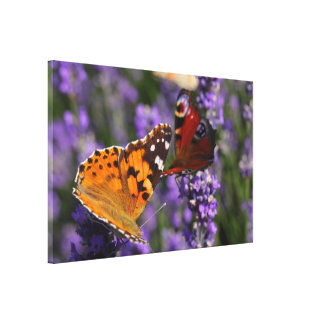 painted lady and peacock butterfly canvas print