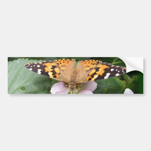 Painted Lady butterfly ~ bumper Car Bumper Sticker